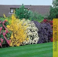 Красивые кустарники в саду.
