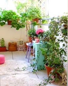 Комнатные растения на балконе фото