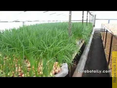 Embedded thumbnail for Самая главная ошибка при выращивании лука на перо