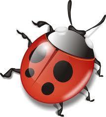 Полезные насекомые помогают в борьбе с тлёй
