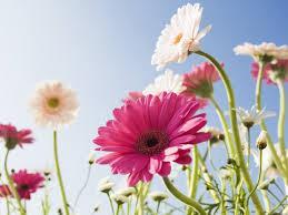 Можно ли дома выкапывать цветы и сажать их на кладбище?