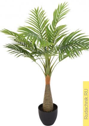 Плохо растет пальма в домашних условиях, как ей помочь?