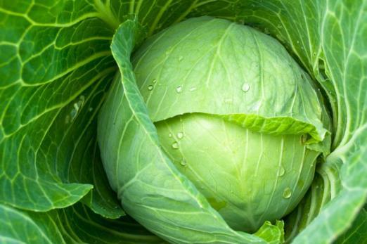 Основы возделывания семенников овощных культур.