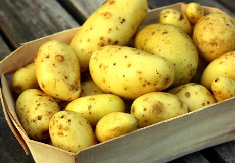 Клубни картофеля на посадку.