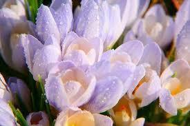 Рецепты выгонки веток красиво цветущих кустарников в зимнее время