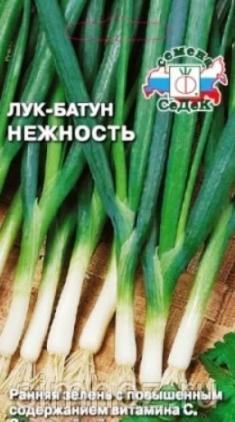 Лук-батун. Выращивание семян лука-батуна.