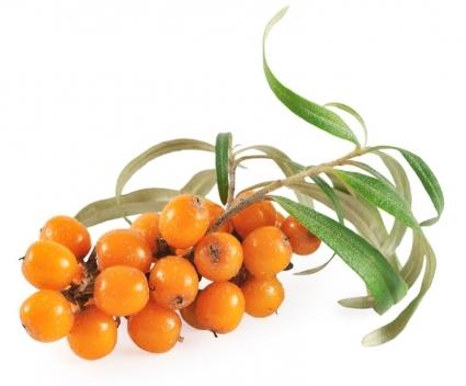 Выращиваю облепиху сорта «Золотой початок». Облепиха — мои золотые ягоды.