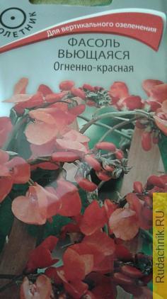 ognennaya_fasol.jpg