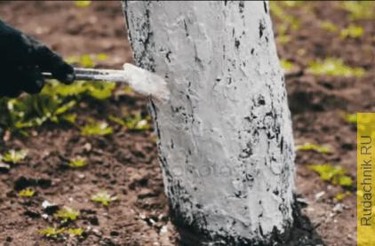 Побелка для деревьев, какую лучше купить?