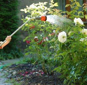 Полив огорода.