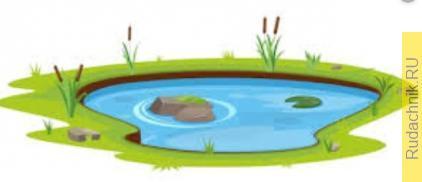 Где лучше разместить водоем — в тени, под деревом, или на солнце?