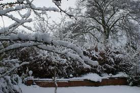 Как подготовить сад к зиме.