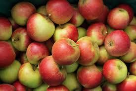 Сорта яблок для приготовления сухофруктов