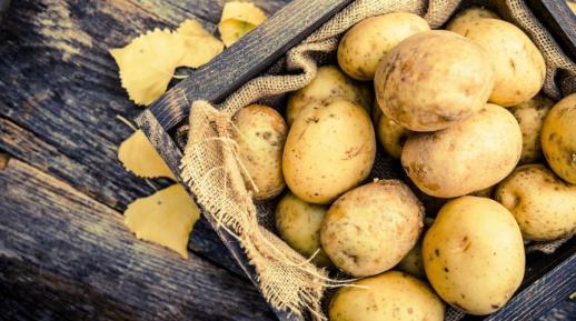 Два урожая картофеля за сезон, фото.