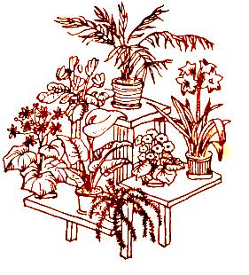 Комнатные растения и цветы зимой