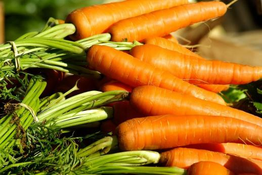 Сорт моркови с острым носом фото