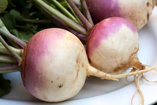 Репа (Brassika rapa): выращивание, уход, болезни, вредители и сорта.