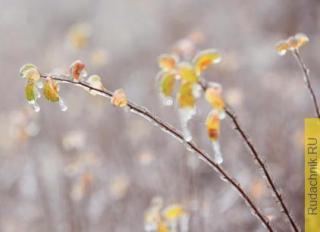 Чем грозит ледяной дождь для плодовых деревьев?