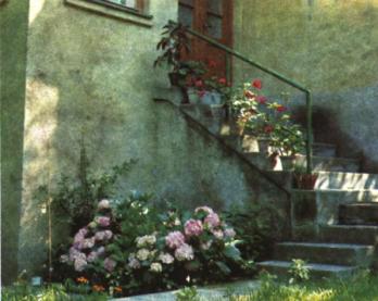 В палисаднике жилого дома
