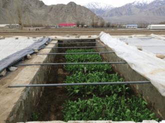 Траншейное выращивание овощей.