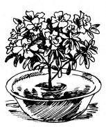 горшок с растением надо погрузить в таз с водой