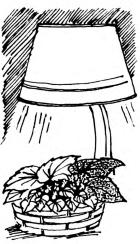 Корзинку или кашпо с декоративными растениями очень полезно поместить зимой около напольной лампы