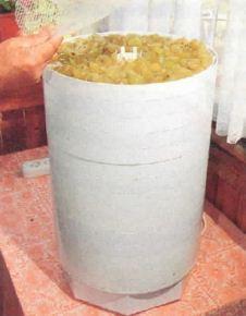 Технология приготовления изюма в домашних условиях