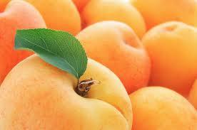 Описание техники выращивания абрикосов