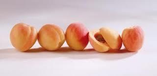 Сорта абрикосов