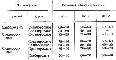 Рекомендуемые расстояния между ярусами у правильной (ярусной) пальметты яблони