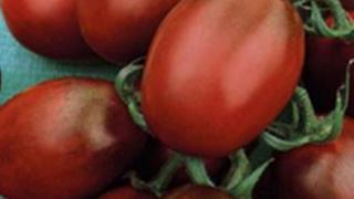 Де Барао - сорт томатов