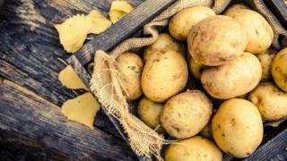 Как получить 2 урожая картофеля за сезон