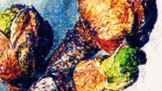 Почковый клещ на смородине