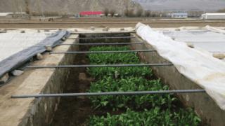 траншеи для выращивания овощей
