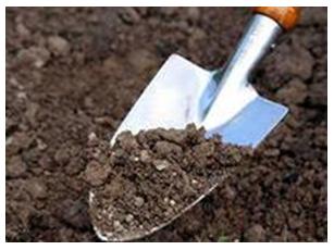 культивация почвы под виноград